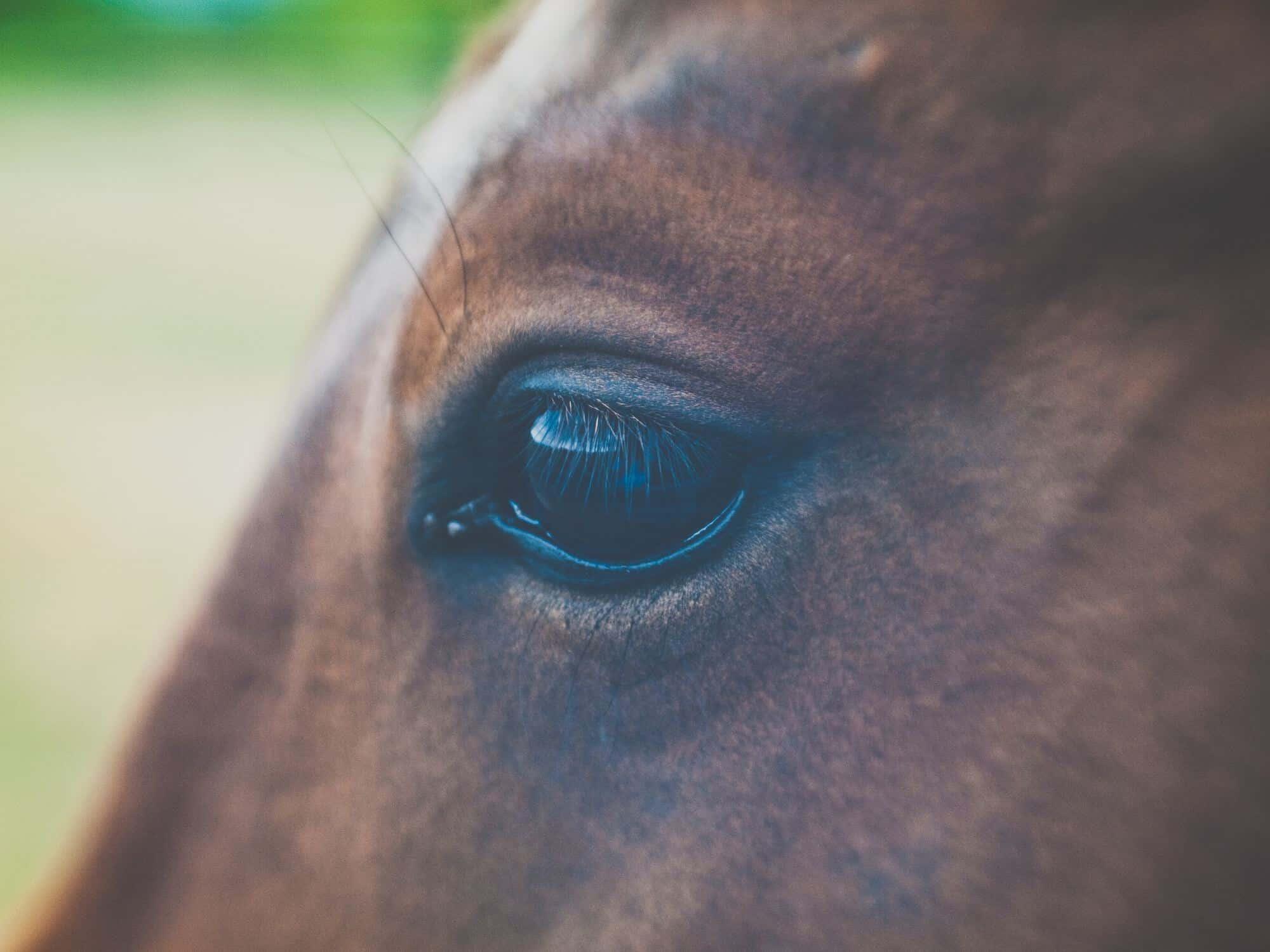 Training Leiderschap met paarden van Epic Agility