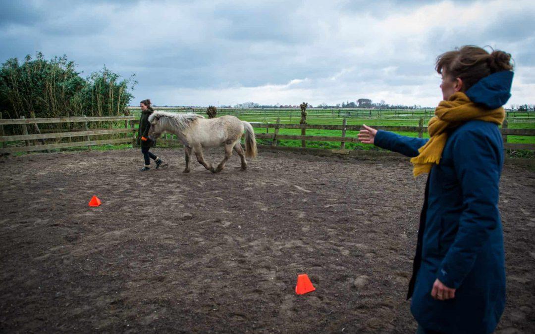 Leiderschaps ontwikkeling met paarden